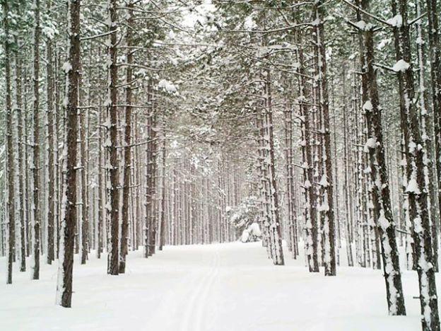 Glenelg Forest